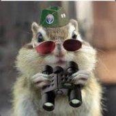 Cpt.Squirrel