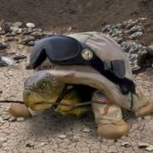 SGT. Turtle